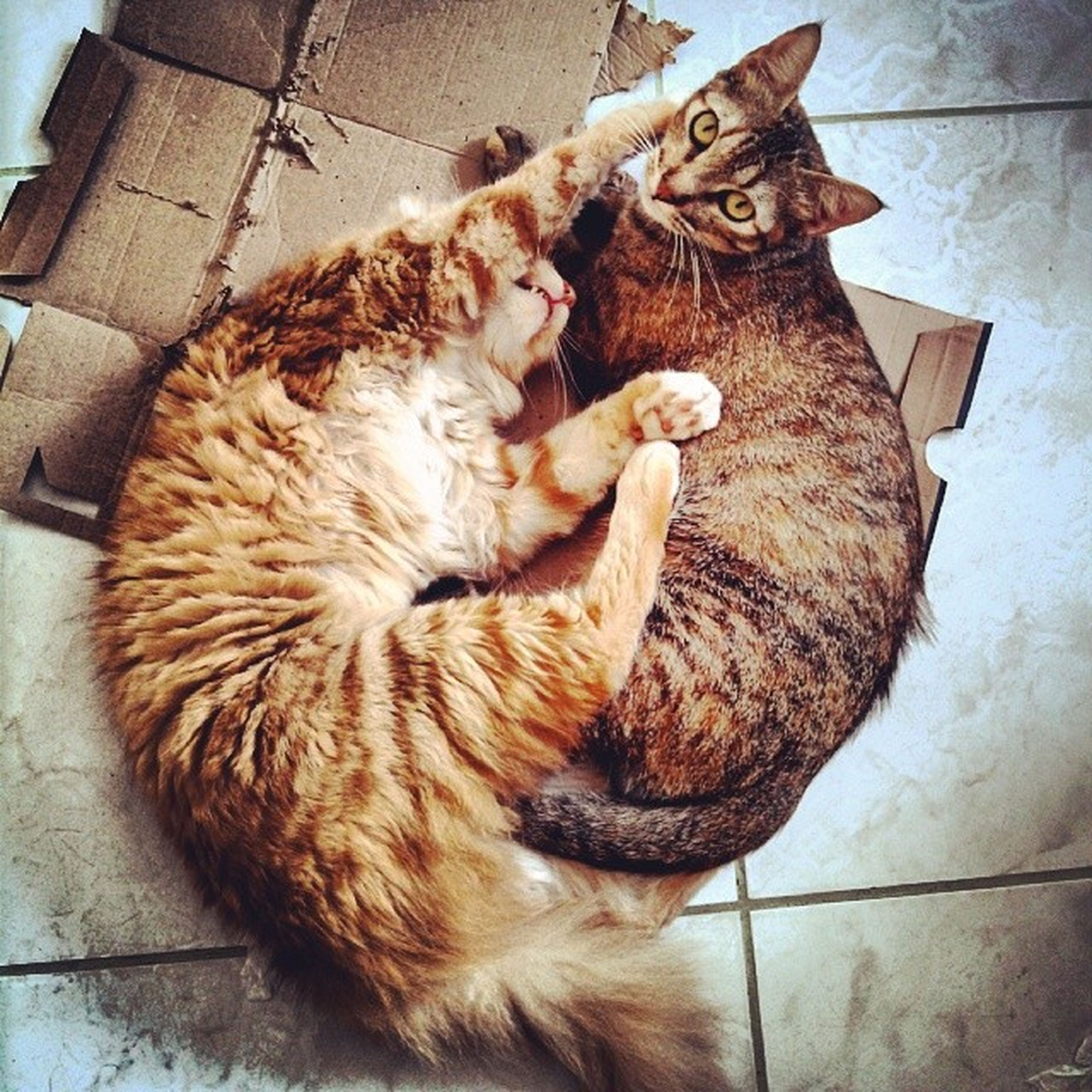 domestic animals, animal themes, mammal, domestic cat, pets, cat, one animal, feline, relaxation, sleeping, indoors, resting, lying down, eyes closed, whisker, high angle view, two animals, no people, animal, close-up