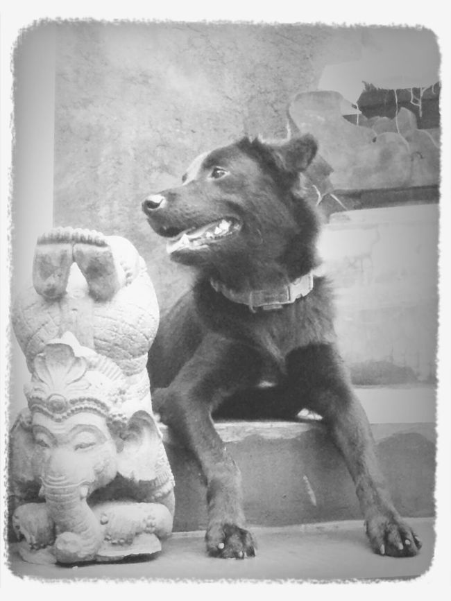 weeko - my almost vegetarian dog... Enjoying Life Blackandwhite Puppy Bali