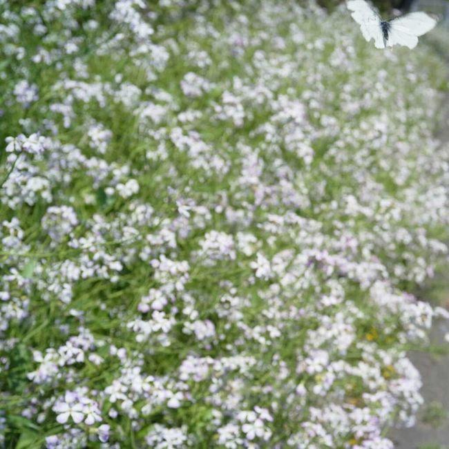 Flowers Voigtländer Insect Ricoh GXR Color-skopar 25mm/f4