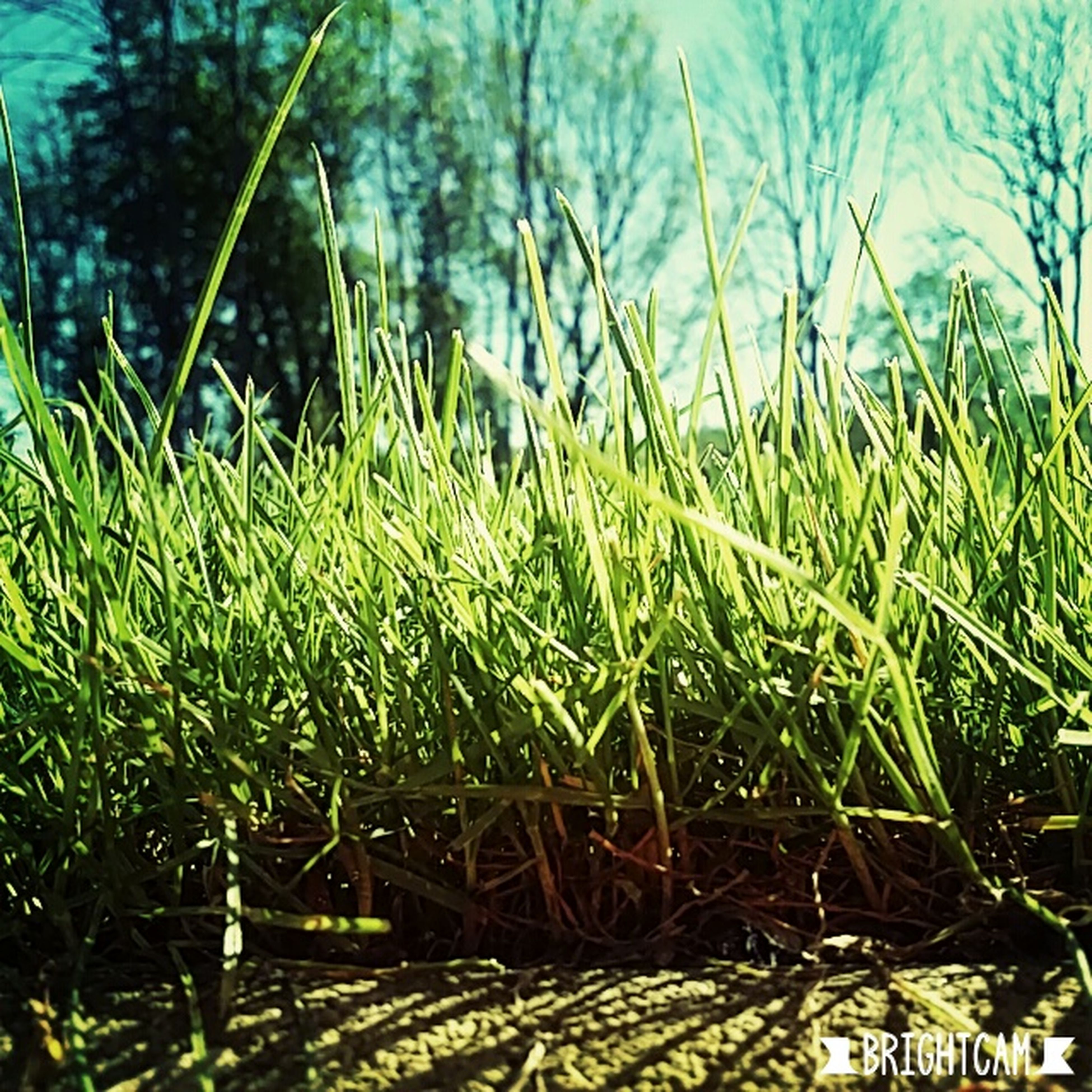 grass, growth, day, nature, no people, outdoors, sunlight, green color, tranquility, beauty in nature, water, close-up