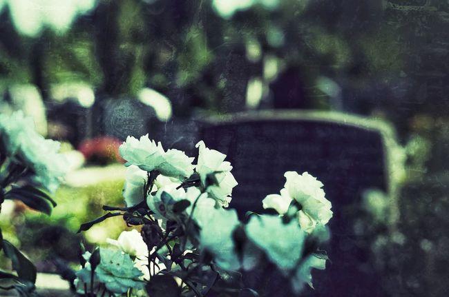 Park Funeral Farewell Last Goodbye Cemetery