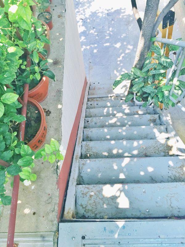 Summer Sunny Home Relax Plantpot Green Enjoy Softcolors