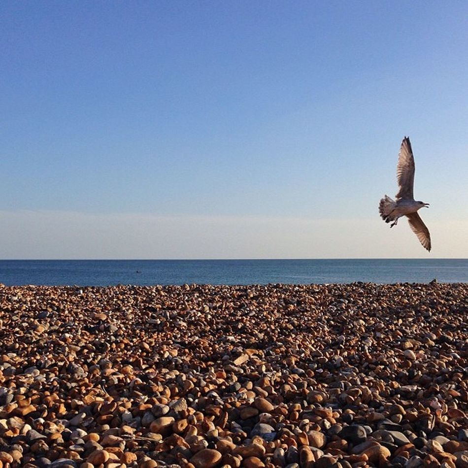 Just a #beach and #seagull in #brighton ☀️?????? Secretlandscapes Seagull Barbourwildbritain Brighton Alan_in_brighton Gang_family Insta_brighton Allshots_ Igers_brighton Gf_uk Gi_uk Ig_england Aauk Ic_cities_brighton Capture_today Loveyoursummer Mashpics Top_masters Beach From_city Pro_shooters
