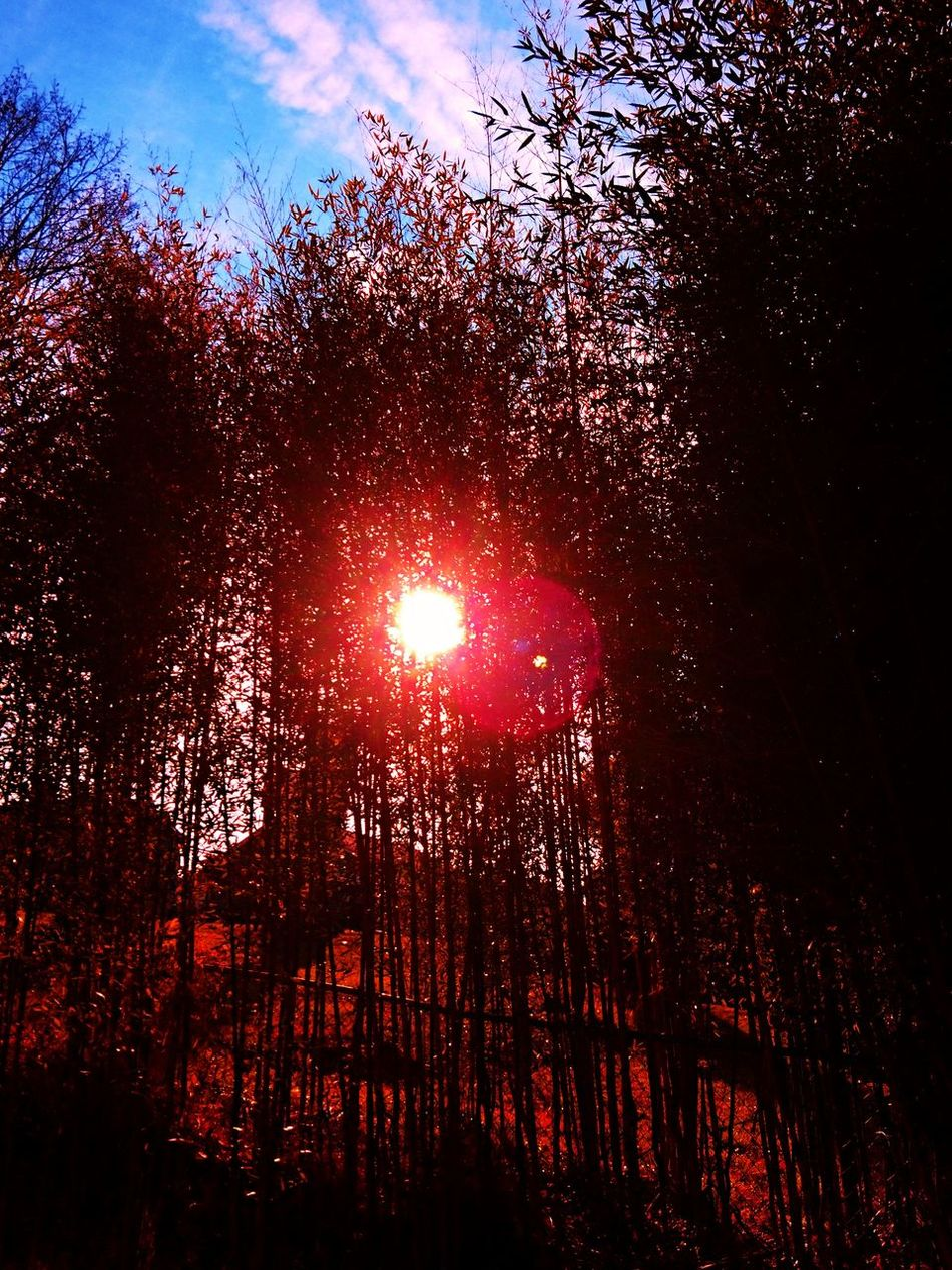 Backgrounds Beauty In Nature Cloud - Sky Dark Glowing Growth Illuminated Nature Night No People Outdoors Red Scenics Sky Tranquil Scene Tranquility Tree Weather