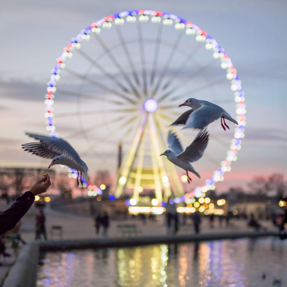 Beautiful stock photos of wildlife, Amusement Park, Amusement Park Ride, Animal Themes, Animals In The Wild