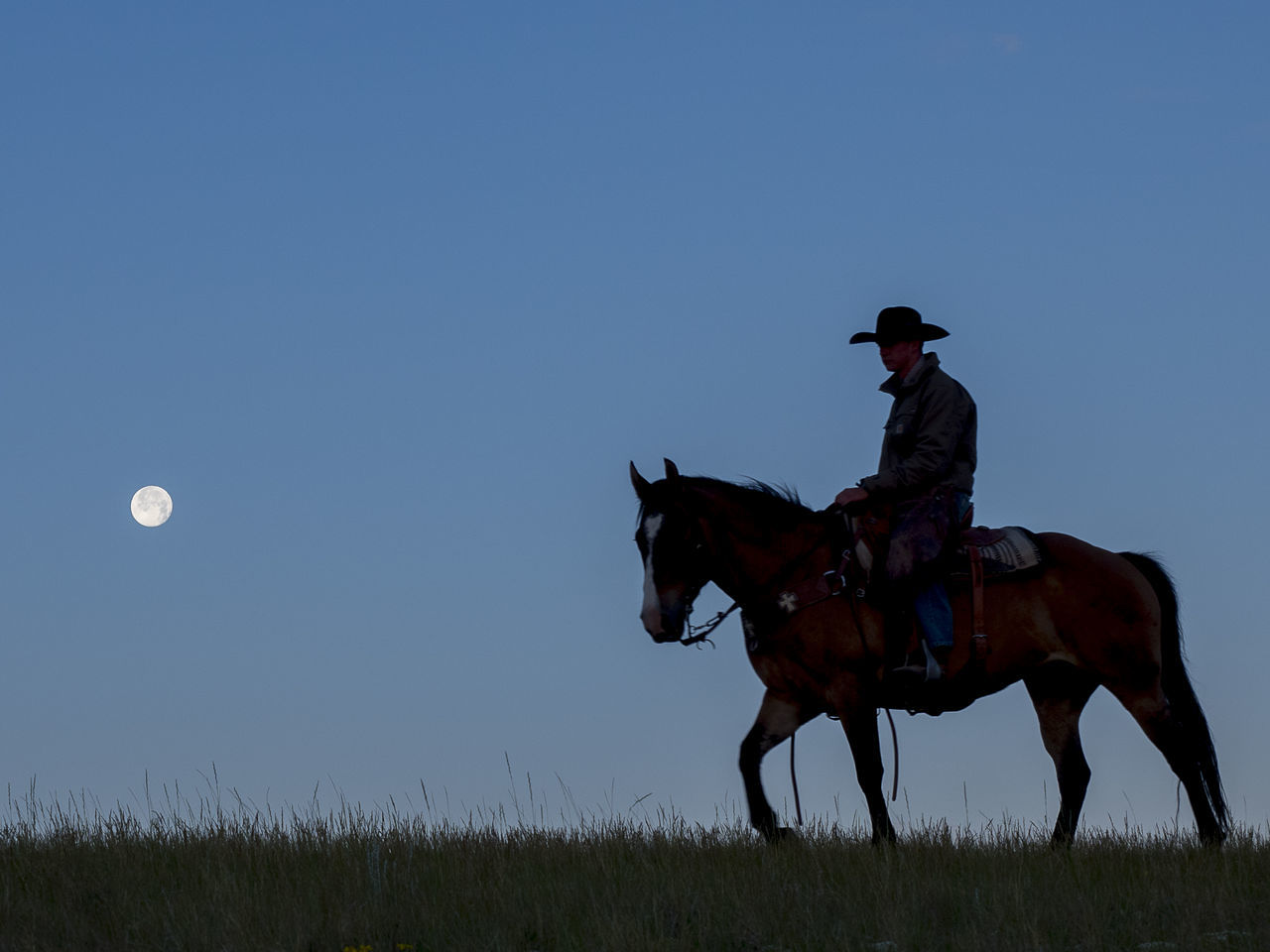 Beautiful stock photos of full moon, American Culture, Animal Riding, Animal Themes, Copy Space