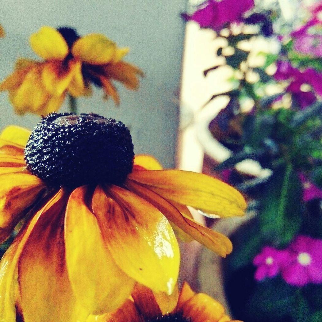 Flowerporn Flowers Nature Photography Showcase:November OpenEdit