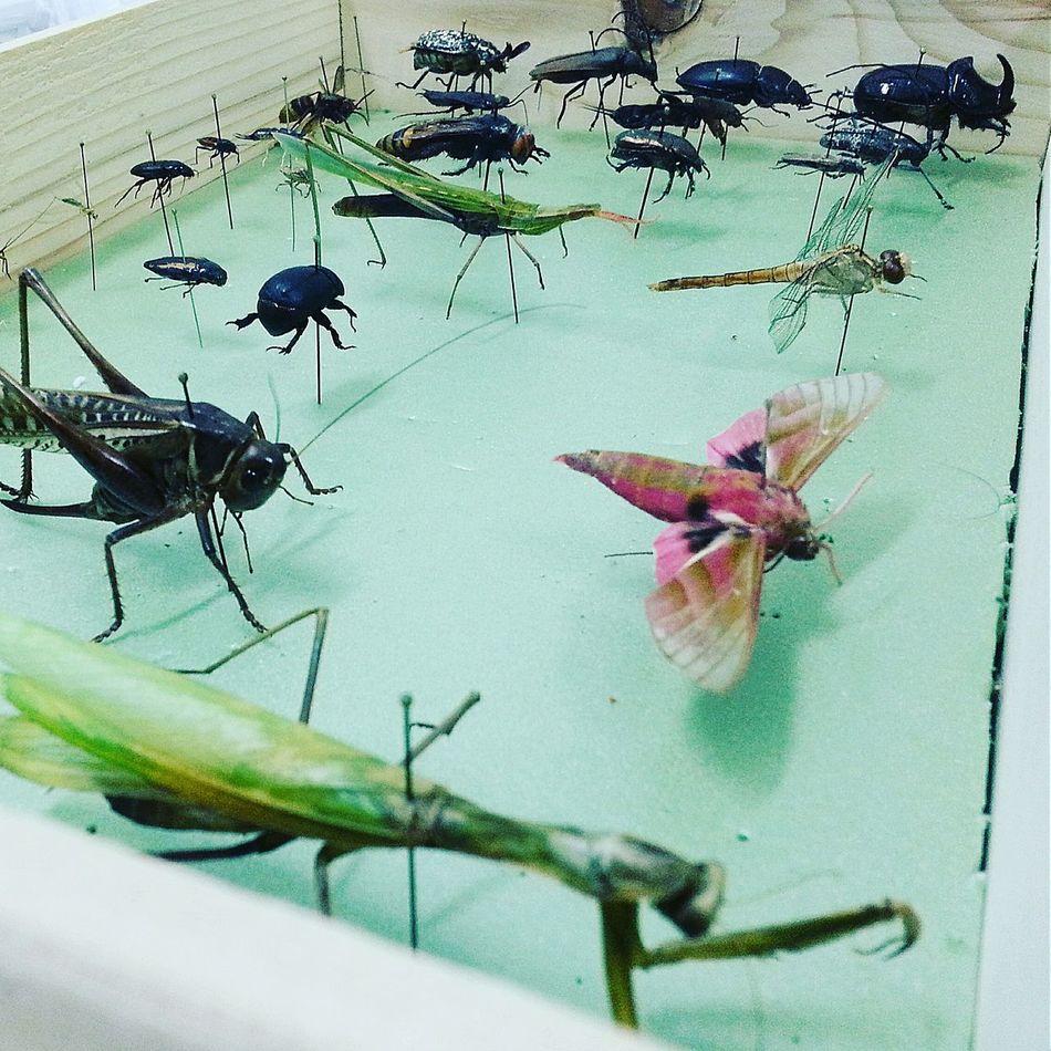DüzceUniversity First Eyeem Photo Entomoloji