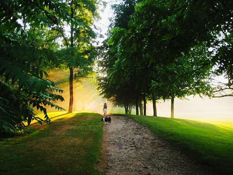 WeatherPro: Your Perfect Weather Shot Sunshine Sun Light Through Trees Smithtown USA Children Dogs Shelties