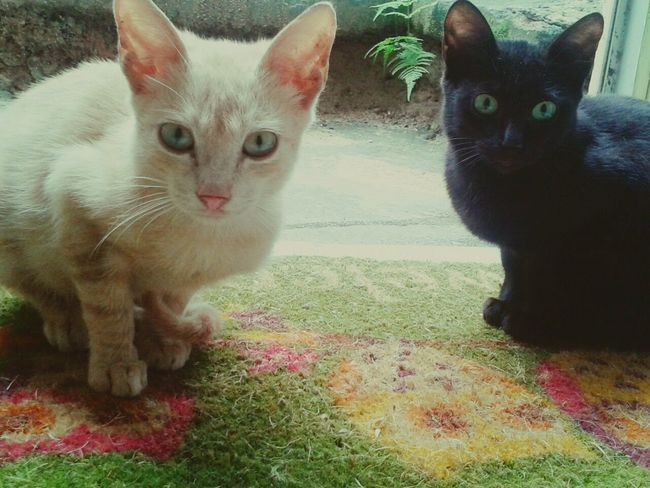 Hello World Cat♡ Cat Lovers Visitando Visitantes