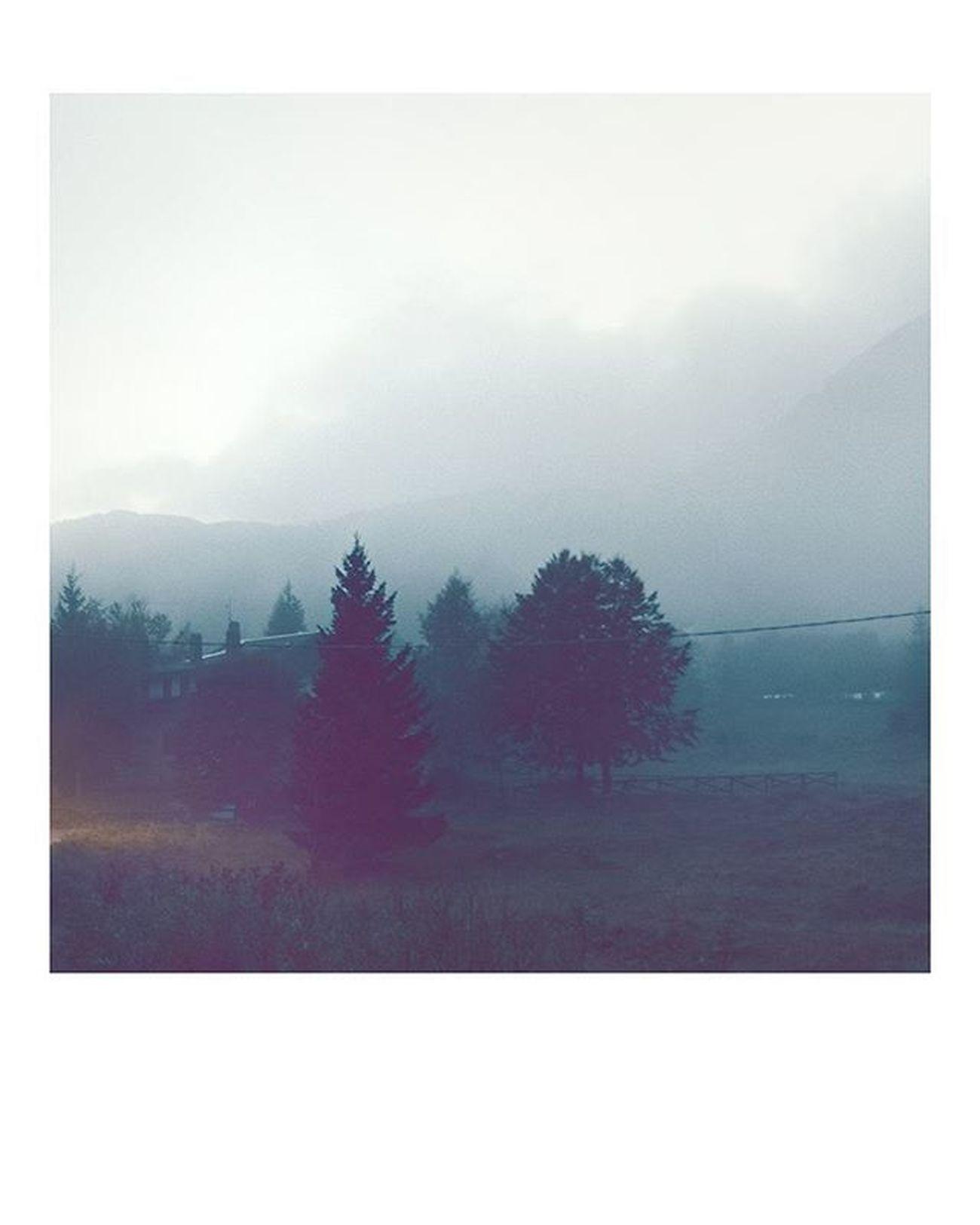 Photooftheday Mountain Mountainview Explore Wildernessculture Livefolk @folk Tree Fog Piancavallo Fvg Walk