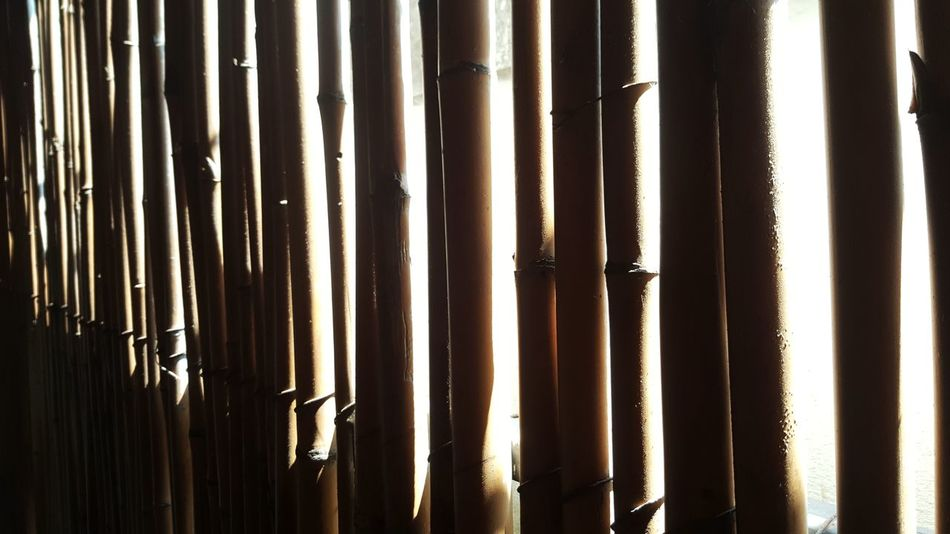 Full Frame Backgrounds No People Textured  Outdoors Day Sunshine Bamboo Bamboodesign Stripes Pattern The City Light