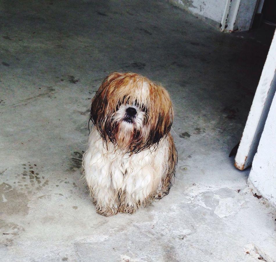 Hello World Dog