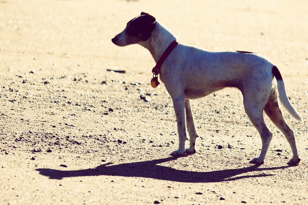 SIDE VIEW OF DOG ON BEACH