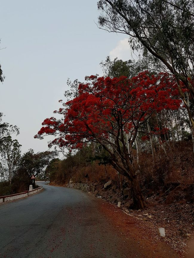 Beauty enroute to destiny Nature Photography True Colours Of Life