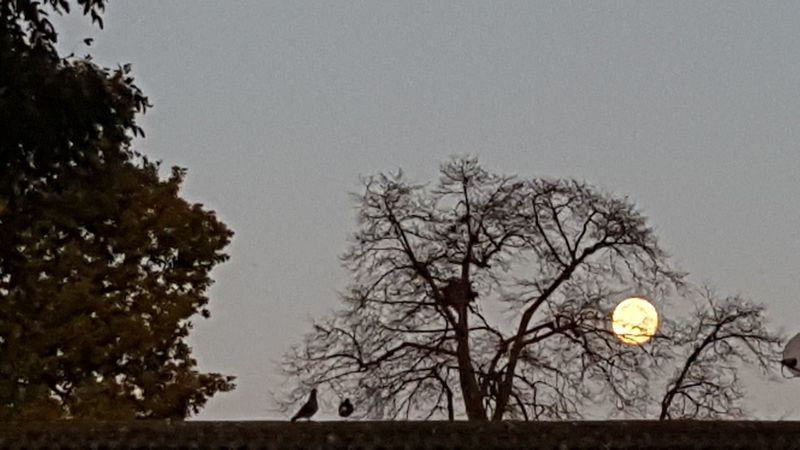 Full moon playing hide and seek Fullmoon Tree Bare Tree Moon Sky Outdoors Branch Tranquility