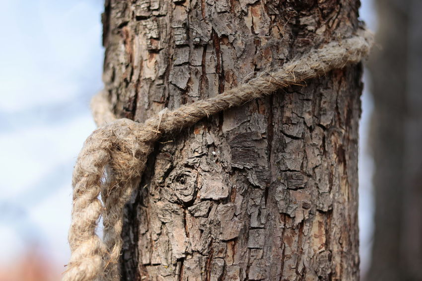 Day Textured  Outdoors Tree Trunk Rough Close-up Ancient Nature Low Angle View Rope The Week On EyeEm Fragility