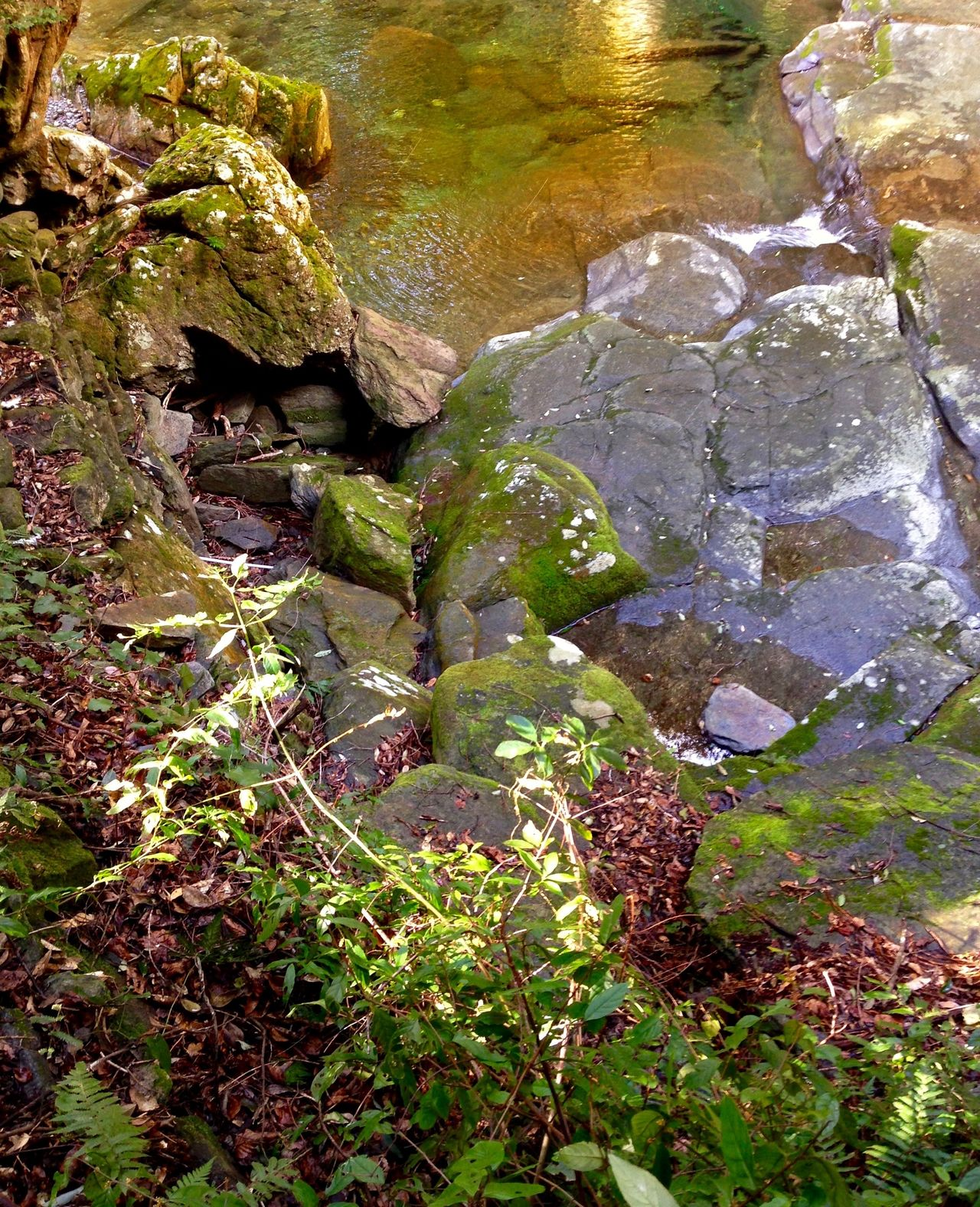 Creek Stream - Flowing Water Creekside Creekside Trail Creekside Photography Creek Water 💦 Rock Rock Formation Nature Water Beauty In Nature No People Tranquility Plant Scenics Outdoors Leaf Growth Day