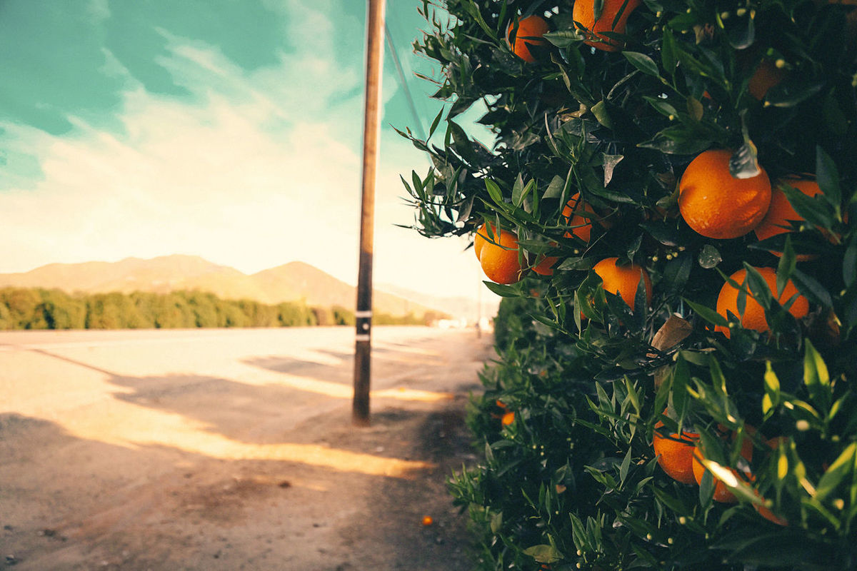 #california #countrysunrise #Road Beauty In Nature Close-up Day Food Freshness Fruit Growth Healthy Eating Mountain Nature No People Orange Color Orange Tree Outdoors Sky Sunlight Tree