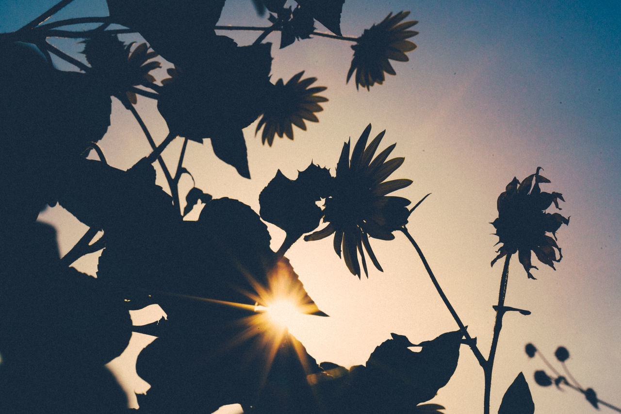 Beauty In Nature Calm Flare Flowers Nature No People Peaceful Silhouette Sun Sunlight Sunset