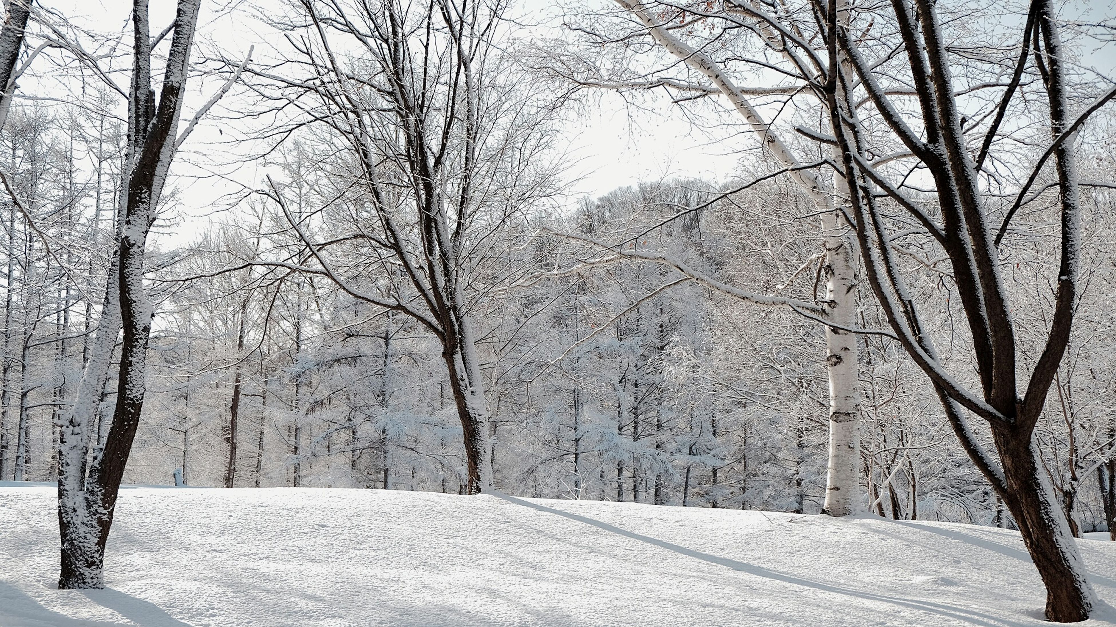 snow, winter, cold temperature, bare tree, tree, season, weather, covering, branch, tranquility, tranquil scene, nature, the way forward, landscape, frozen, tree trunk, white color, scenics, snow covered, beauty in nature