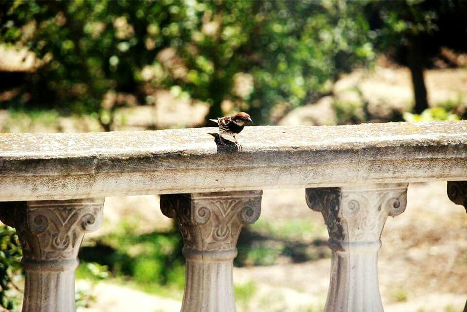 Focus Object Fromtunisiawithlove Animal Themes Bird Nature Animal Wildlife One Animal Wood - Material