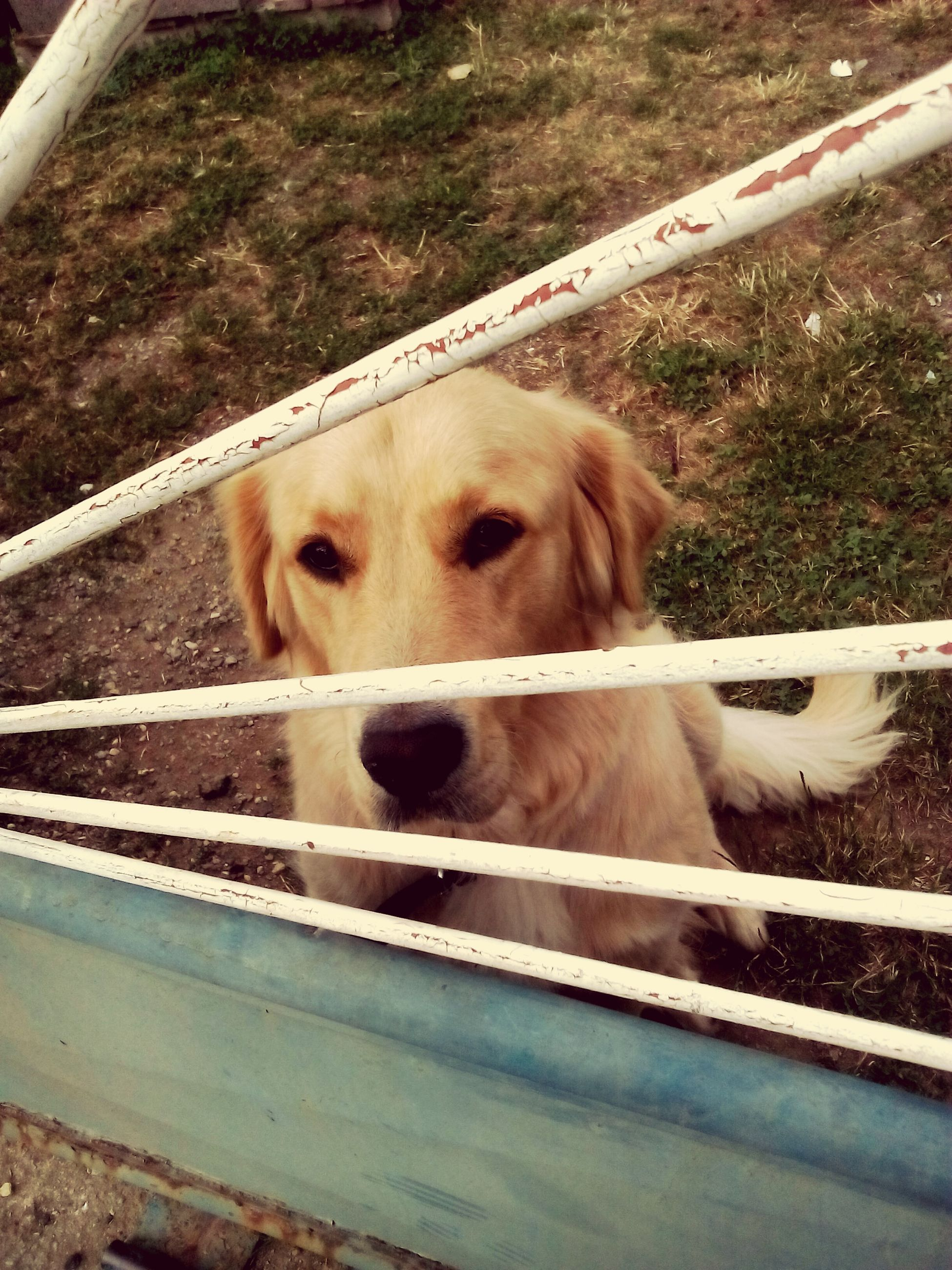 domestic animals, mammal, animal themes, pets, dog, one animal, day, no people, outdoors, close-up, nature