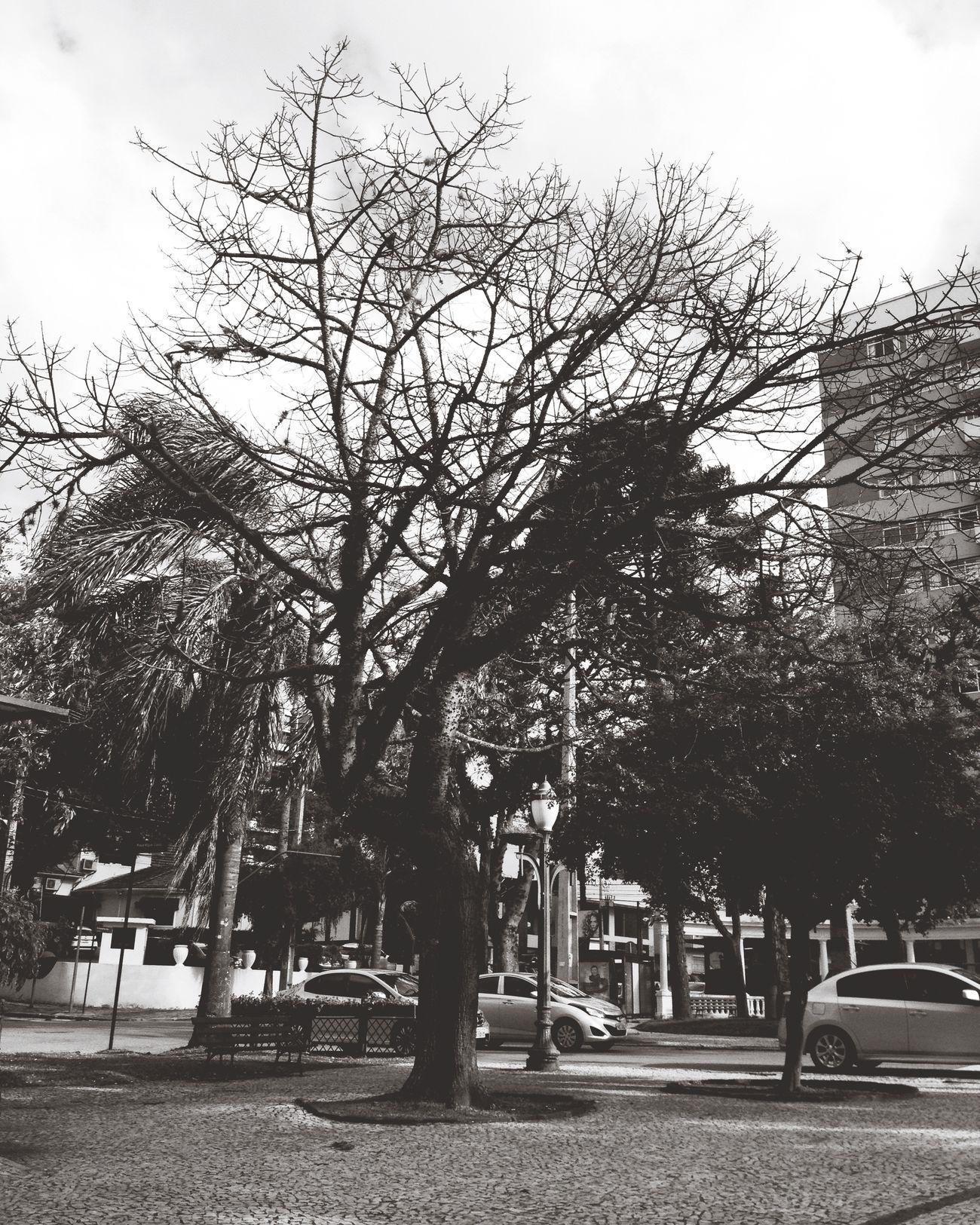 Vem chuva Curitiba Batel Brasil Brazil