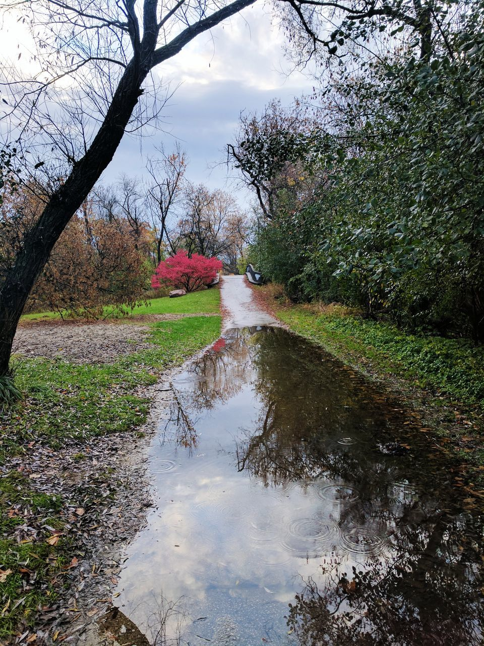 tree, nature, water, growth, reflection, beauty in nature, no people, day, tranquility, outdoors, sky, branch, scenics, flower, grass, puddle