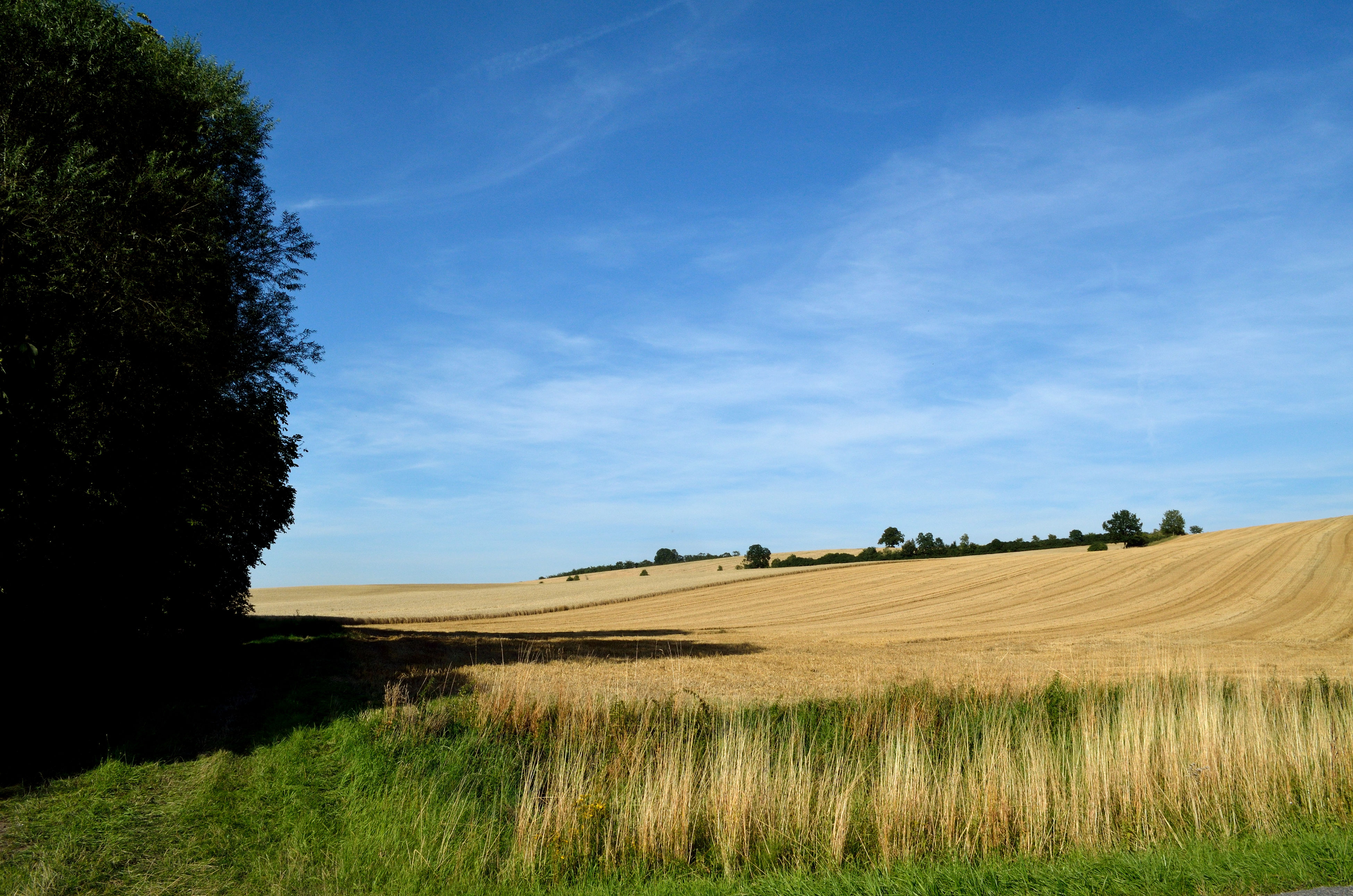 sky, farm, agriculture, rural scene, nature, beauty in nature, landscape, field, growth, no people, tranquility, tree, tranquil scene, scenics, day, outdoors, animal themes, tractor, mammal