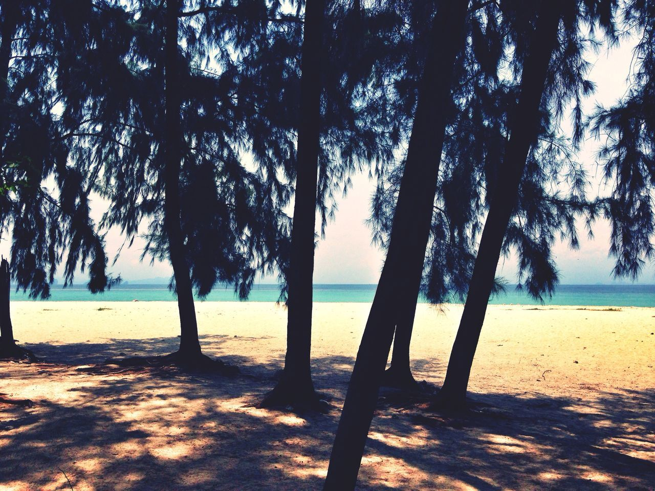 Beautiful stock photos of silhouette, Beach, Beauty In Nature, Day, Growth