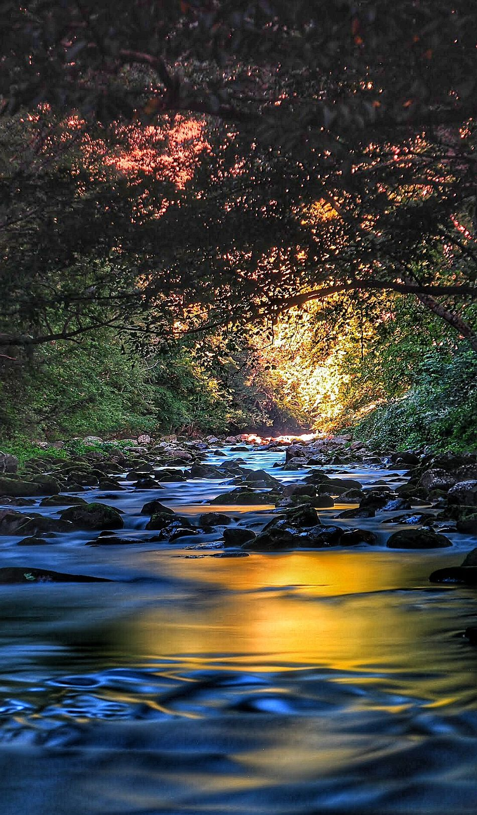Maryland River Riverscape Savage River Depth Of Field Sunrise Watercolor Water Stream Peace