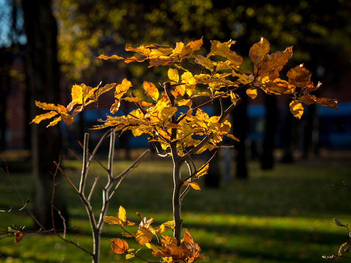 Autumn plant at the central station of Oslo Norway City Park City Fall Autumn Beauty In Nature Branch Change City Autumn Close-up Focus On Foreground Growth Leaf Nature No People Yellow