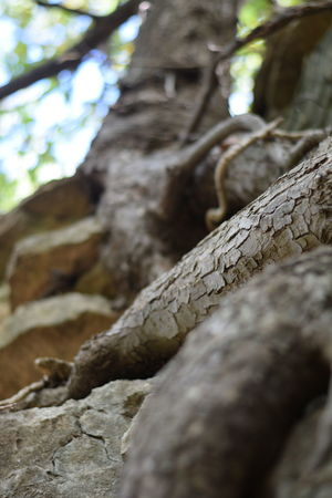 Dramatic Angles Tree Trunk Tree Textured  Branch Close-up Bark Low Angle View Growth Wood - Material Natural Pattern Rough Focus On Foreground Nature Selective Focus Sky Botany Full Frame Day Tall - High Outdoors