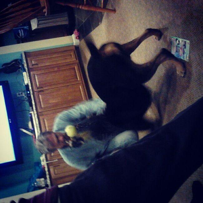Myfamilyiscrazy Dogwrestling