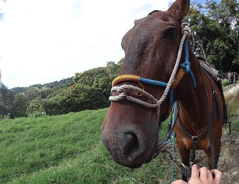 A firm friendship was made with Whiskey the horse at Manuel Antonio ----------------------------------------------------- Horse Horses Friend Horseriding Manuelantonio Costaricagram Costarica2015 Costarica Gadventures Gadventurestour Actioncam SonyActionCam Naturephotography Naturelover Nature Animal Cute Cuteness Travel Travelling Travelgram Instapic Instagram Instatravel Wanderlust takemeback missthathorse