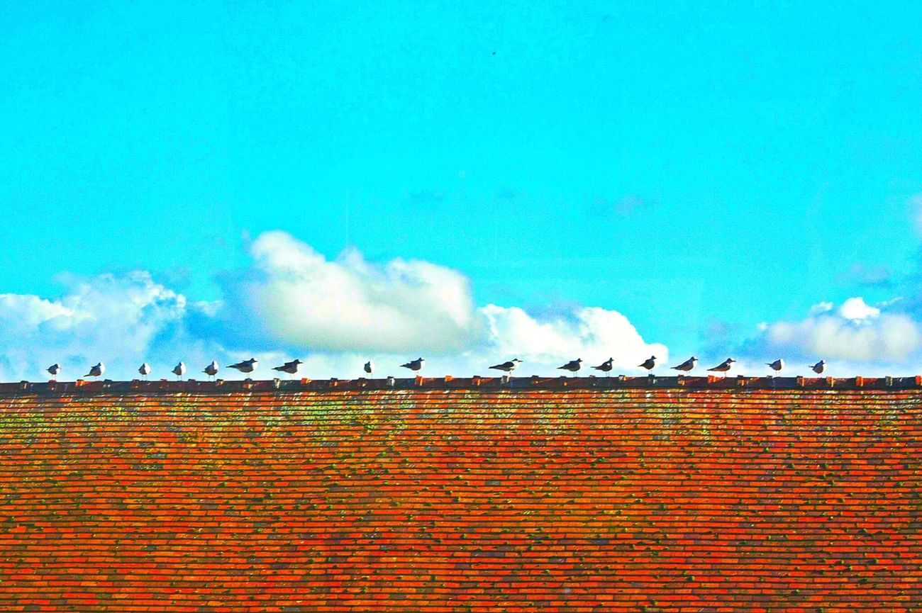Birds sitting on the school roof // Canon 450D // Birds Bird Building Exterior Architecture Sky Roof Outdoors Tiled Roof  Day Animal Themes Animals Toystory Colour Color