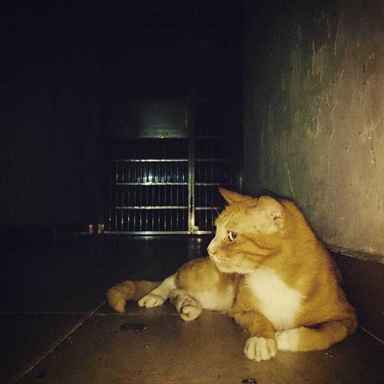 pets, one animal, animal themes, domestic animals, night, no people, sitting, mammal, indoors, dog, domestic cat