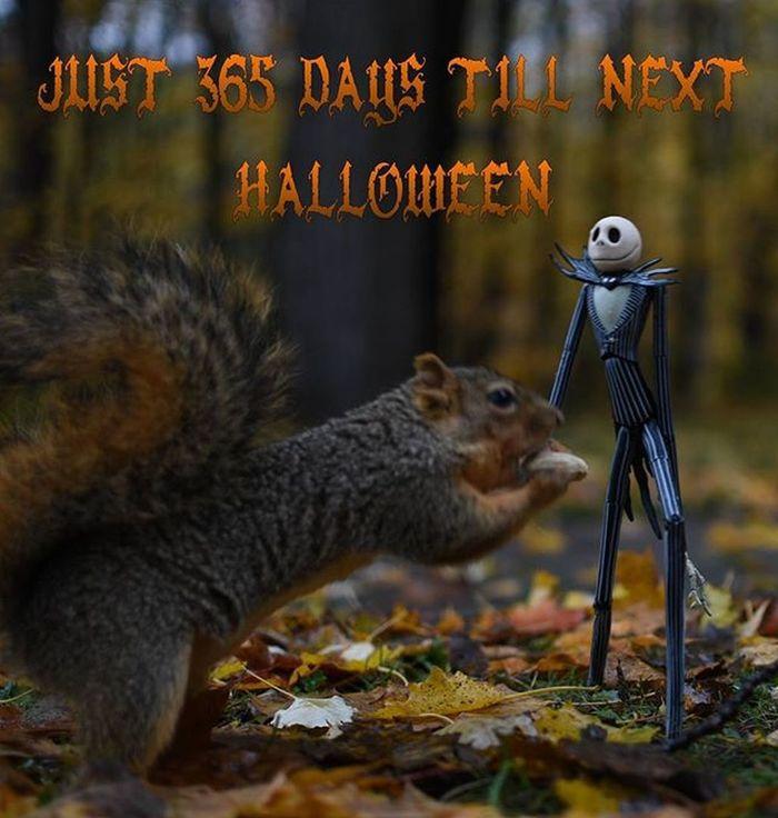 Hope everyone had a fun safe night. Nightmarebeforechristmas JackSkellington Funwiththesquirrels Squirrelsofinstagram Halloween Squirrel Tcbc_halloween2015