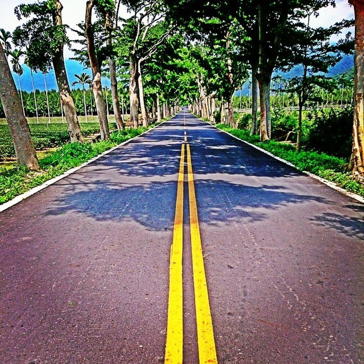 這兩天商管營其實滿好玩的 今天到鹿野龍田 雖然從小就在這長大 但感覺很不一樣 感到驕傲因為風景很美 感到開心因為更進步了 希望這片土地會更好 總之今天很開薰:-) 戶外活動 郊遊 鹿野 龍田 林旺製茶 風景 綠色隧道 綠意 商管營 故鄉 Village Landscape Taiwan Taitung Trees Road Sky Tea Fruit Yummy Beautiful Summer Sunshine Tuesday My Year My View