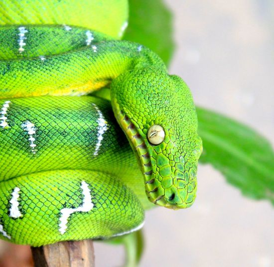 Animal Themes Beauty In Nature Green Color Insect Nature No People One Animal