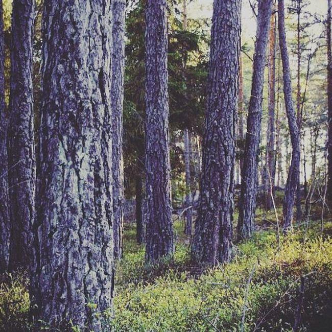 Onokad se izgubis u pizdicima jer ti se ucinilo da mozes da napravis finu fotku. Lazyday Trees Sun Moment Photo Capture Love New Now Colorfull Grass