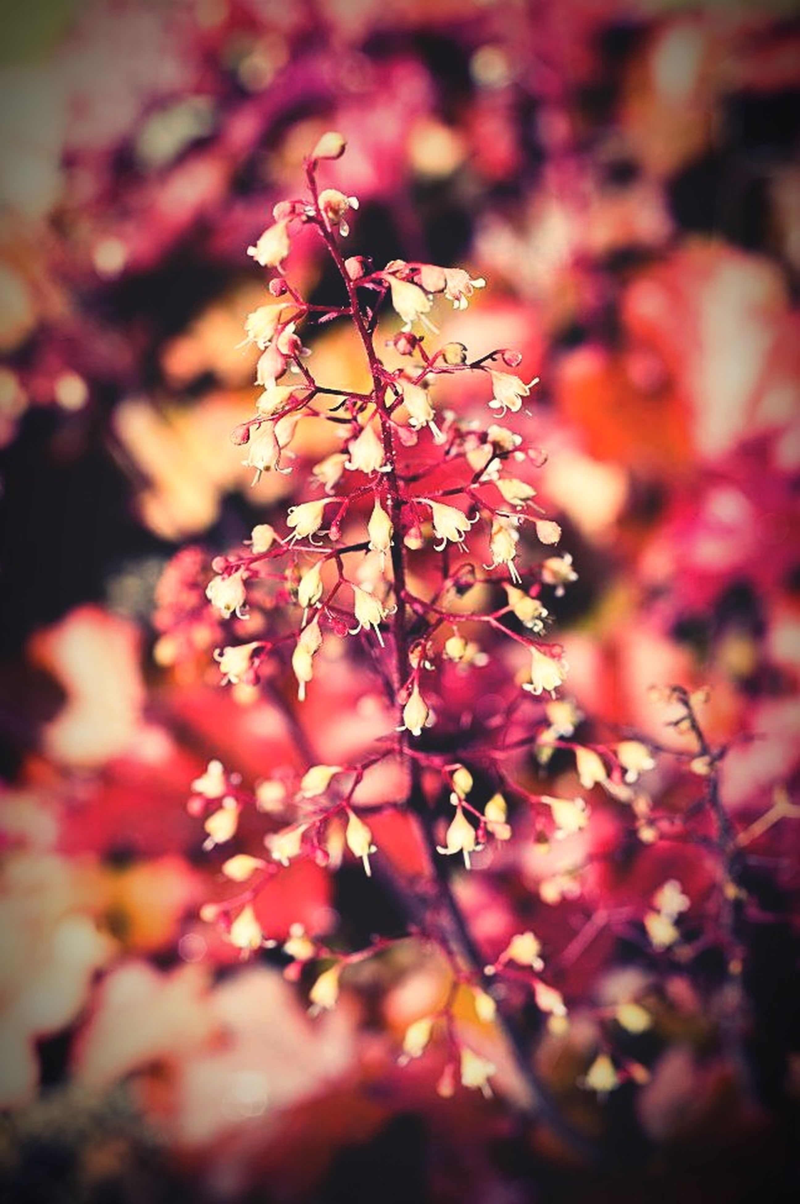 flower, freshness, growth, focus on foreground, beauty in nature, branch, fragility, nature, close-up, tree, petal, selective focus, blossom, twig, pink color, outdoors, blooming, day, season, plant