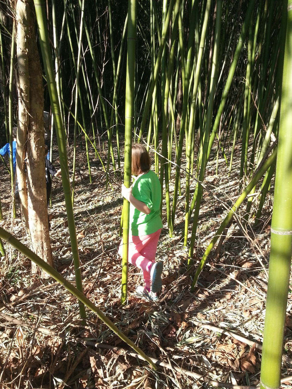 Rear View Of Woman Standing On Amidst Bamboos On Field