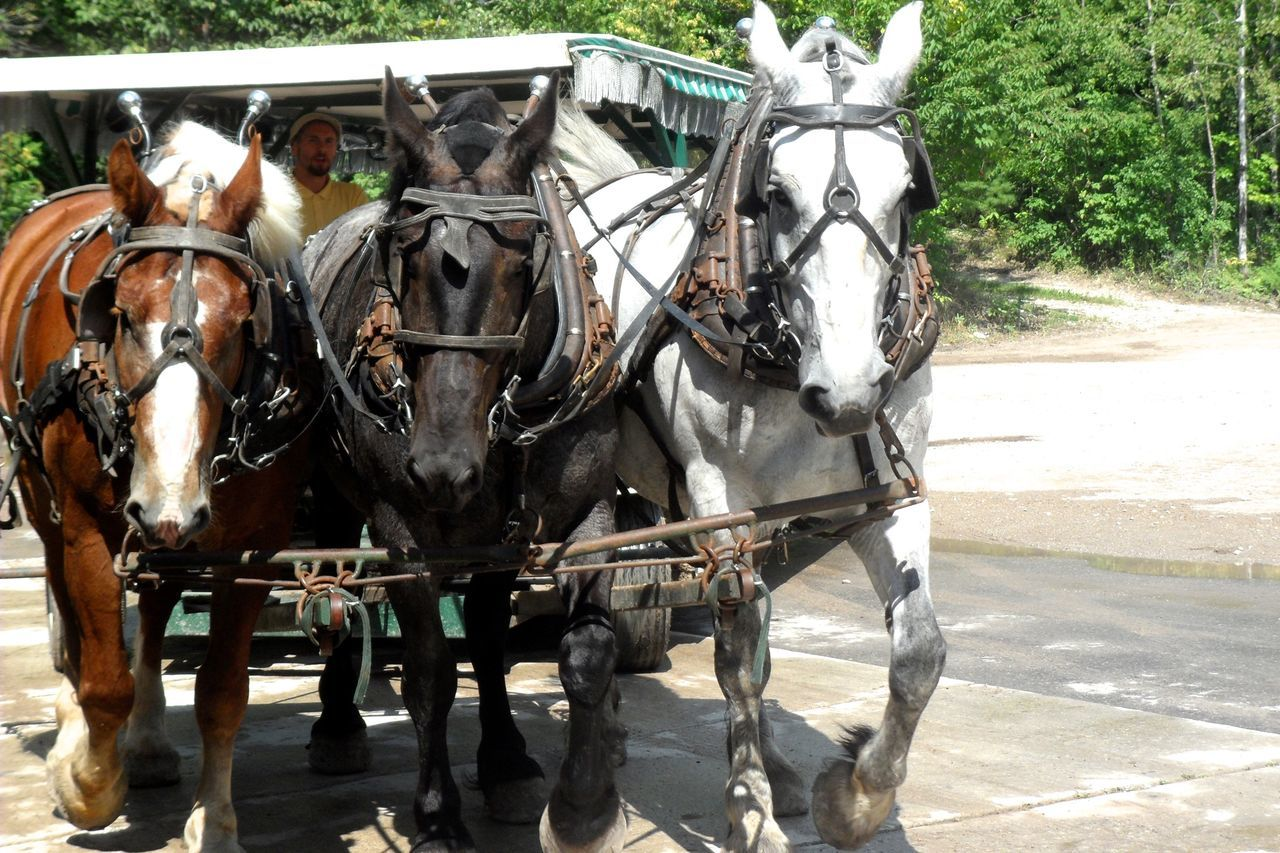 horse, horse cart, horsedrawn, domestic animals, working animal, carriage, transportation, animal themes, mode of transport, two animals, street, mammal, day, outdoors, no people