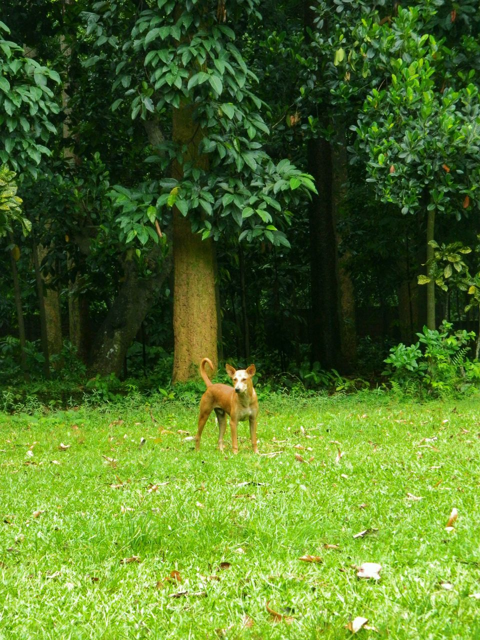 Dog Standing In Grassy Field Against Trees