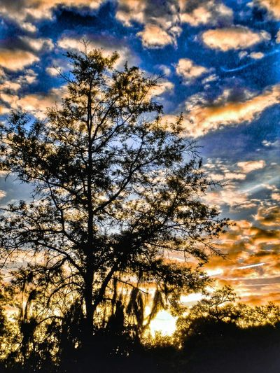Ok. I'm going to sleep now! Enjoy yourselves day walkers! Peace! Nature Sunrise Silhouette Tree