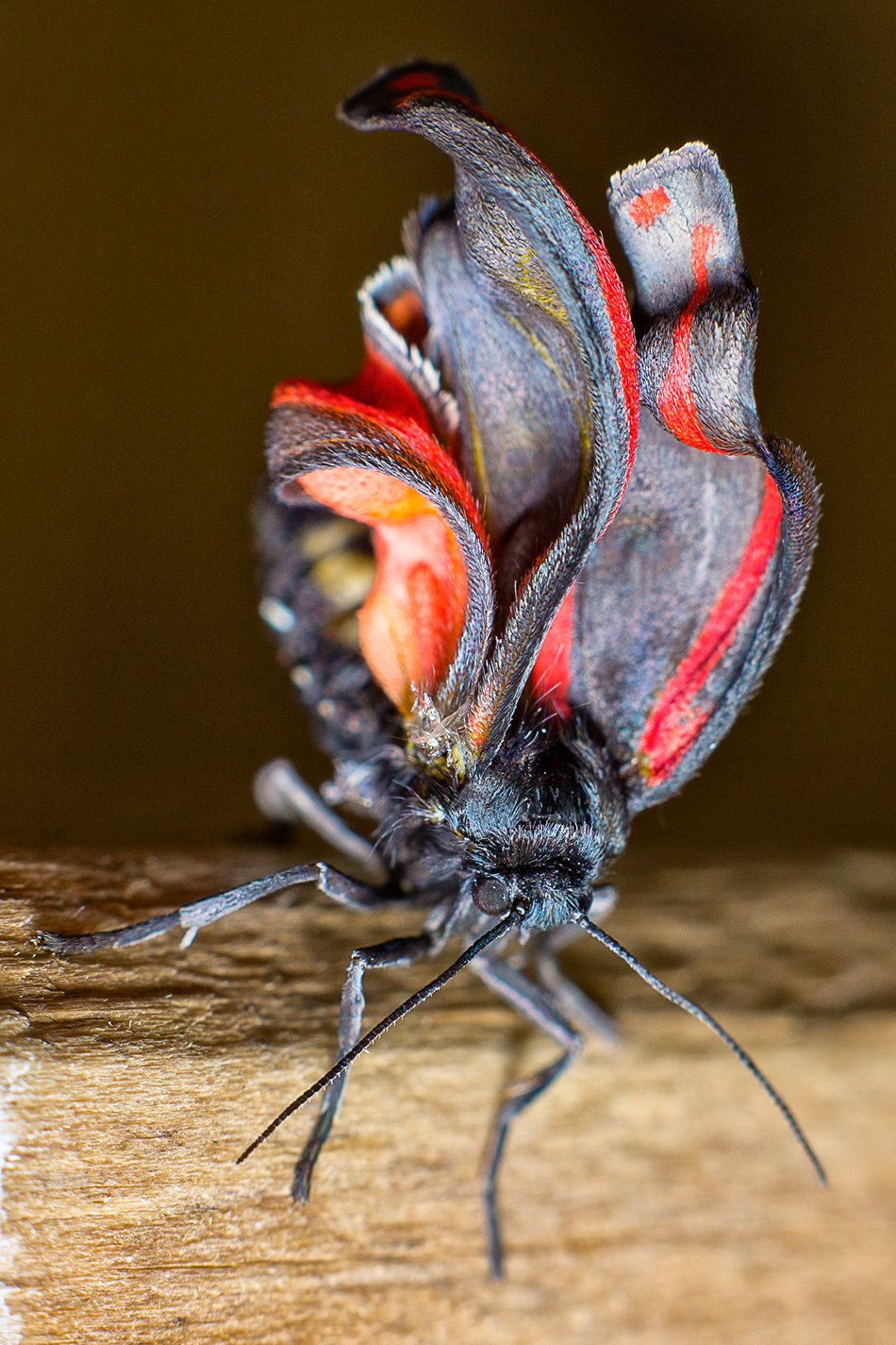 Close-up Focus On Foreground Insect Macro Marcokleinphotography Nature No People Red Selective Focus Zoology