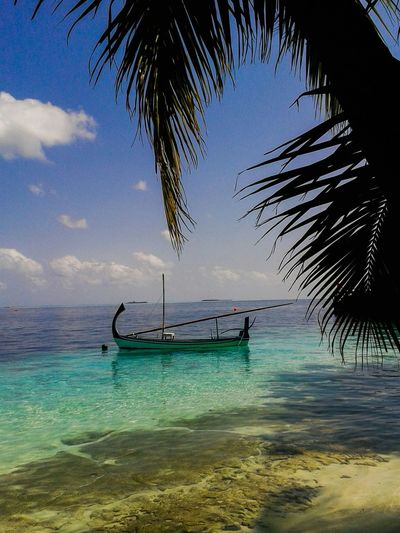 Beautiful Surroundings Holiday Dhoni Water Reflections Palm Trees Natural Beauty! Vilamenhoo Island, Maldives Landscapes With WhiteWall Been There.