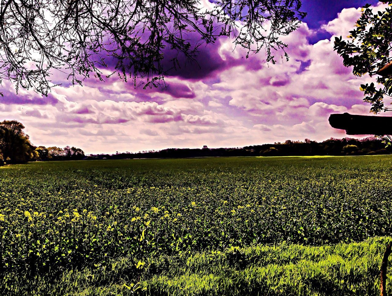 beauty in nature, flower, nature, field, growth, agriculture, tree, sky, tranquility, cloud - sky, tranquil scene, blossom, scenics, no people, rural scene, outdoors, fragility, springtime, plant, blooming, landscape, freshness, day, flower head